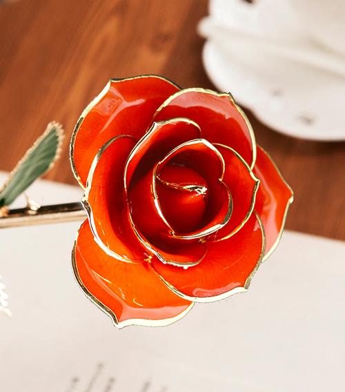 桔红色绿叶子单枝花