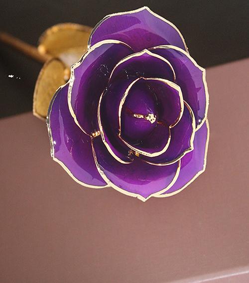 紫色金叶子单枝花